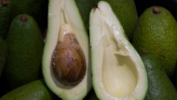 Avocado grün Kiste-Reed